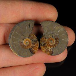AMONIT Z PIRYTEM - 30 mm - KREDA DOLNA - 110 mln lat - DWIE POŁÓWKI - MADAGASKAR