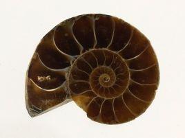 AMONIT - 30 mm - KREDA DOLNA - 110 mln lat