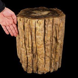 SKAMIENIAŁE DREWNO - DUŻY PIEŃ - 77 kg - MADAGASKAR