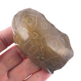KORALOWIEC KOLONIJNY SPRZED OKOŁO 390 mln lat - 74 mm - DEWON - MAROKO
