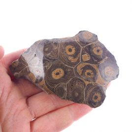 KORALOWIEC KOLONIJNY SPRZED OKOŁO 390 mln lat - 85 mm - DEWON - MAROKO