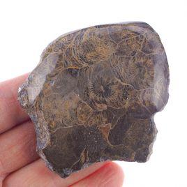 KORALOWIEC KOLONIJNY SPRZED OKOŁO 390 mln lat - 75 mm - DEWON - MAROKO