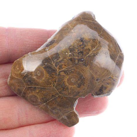KORALOWIEC KOLONIJNY SPRZED OKOŁO 390 mln lat - 59 mm - DEWON - MAROKO