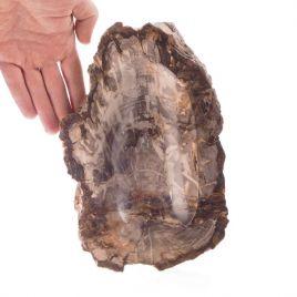 SKAMIENIAŁE DREWNO - ok. 200 mln lat - MISA